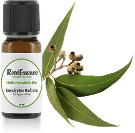 Huile Essentielle Bio Eucalyptus Radiata - Revelessence - Massage and relaxation