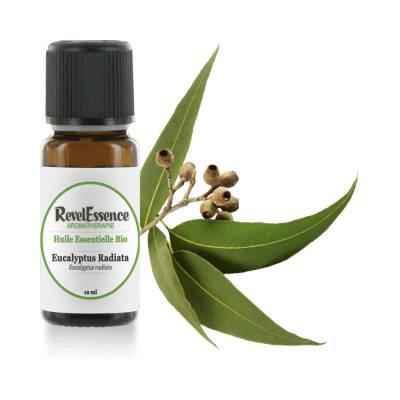 Huile Essentielle Bio Eucalyptus Radiata - Revelessence - Massage et détente