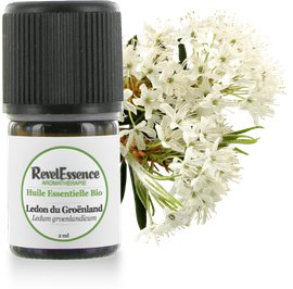 Huile Essentielle Bio Ledon du Groënland - Revelessence - Massage and relaxation