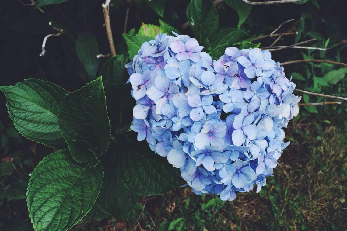 photo-fleur