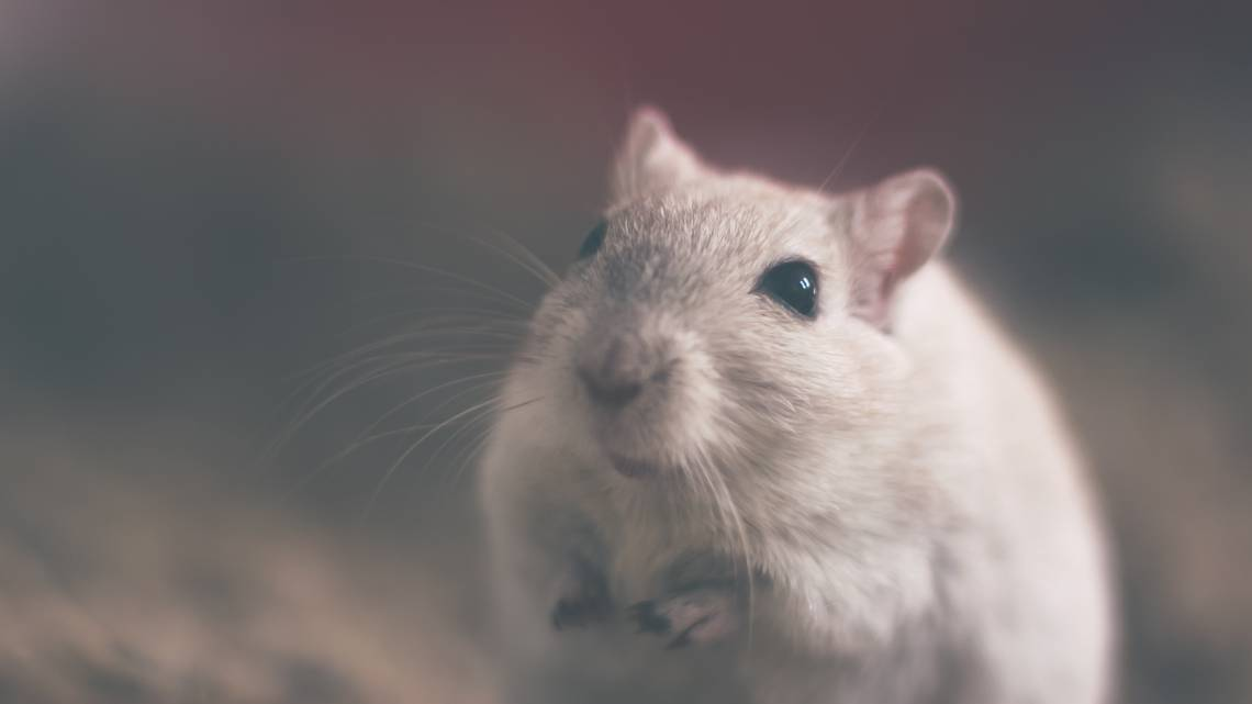 photo-souris-animaux-cosmetiques-bio