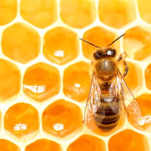photo-abeille