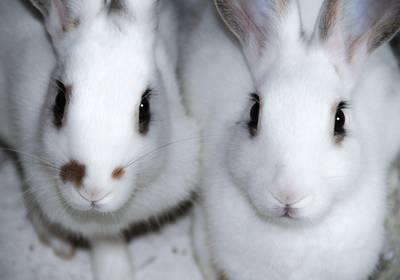 Comparatif des labels vegan et cruelty free cosmétiques