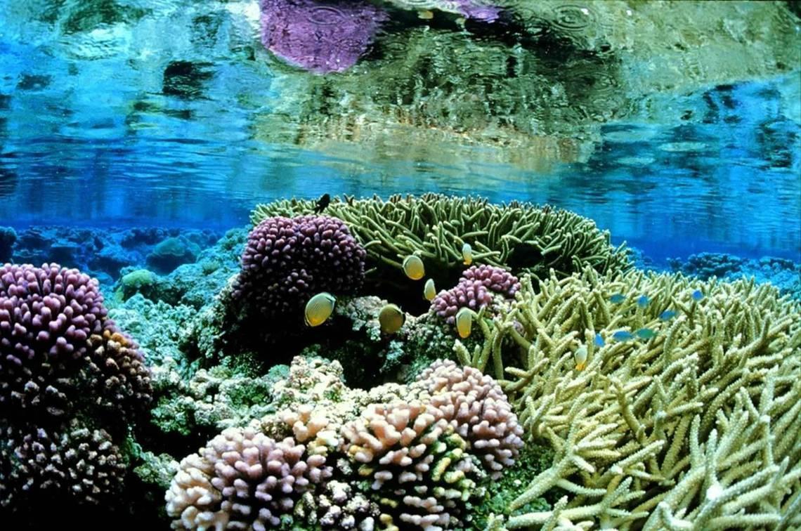 photo-corail